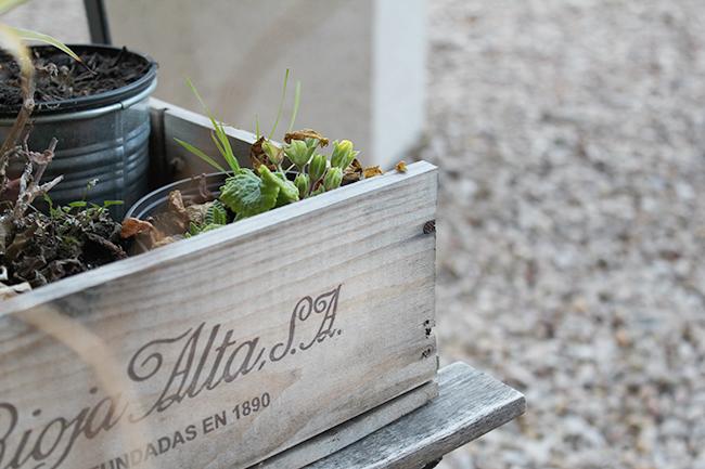 Superkitina blog plantas en el balcón